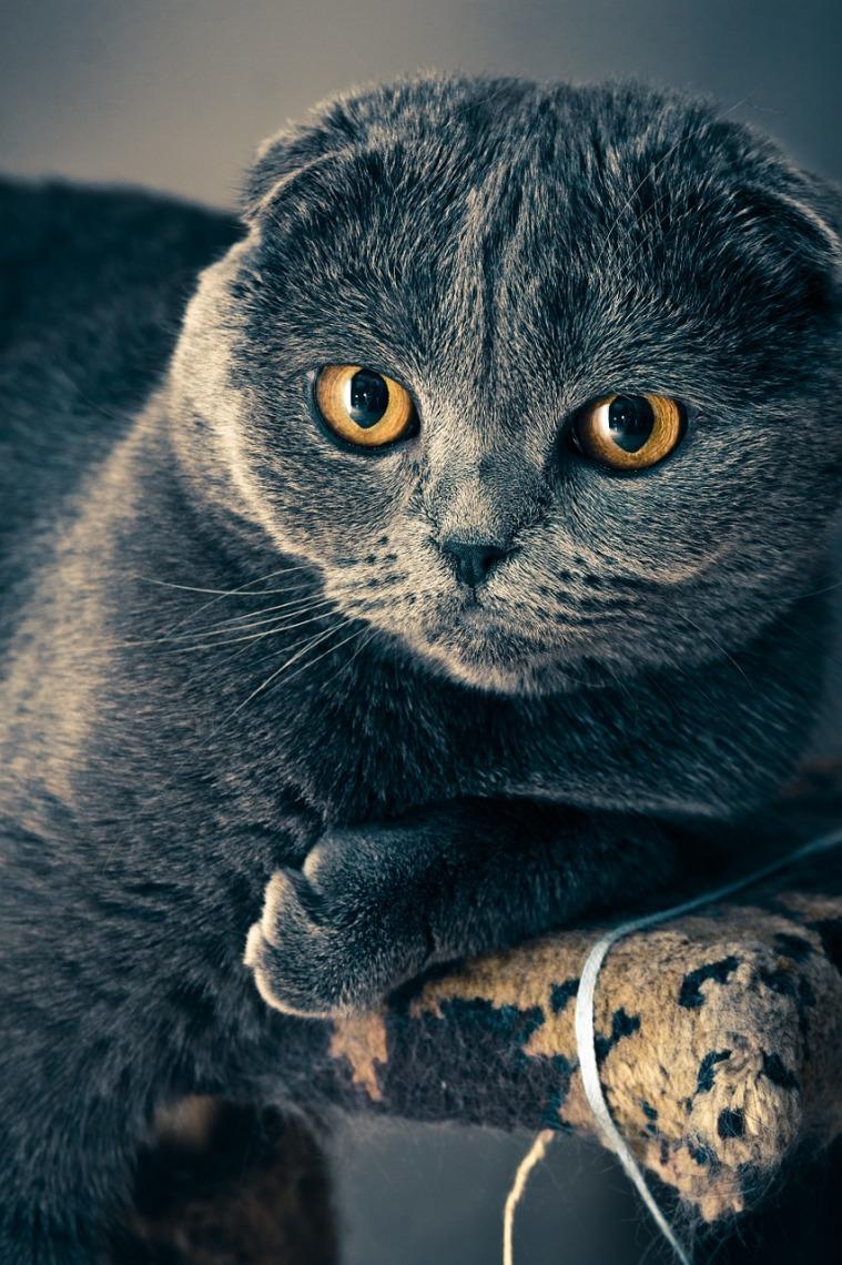 cat-1057829_1280