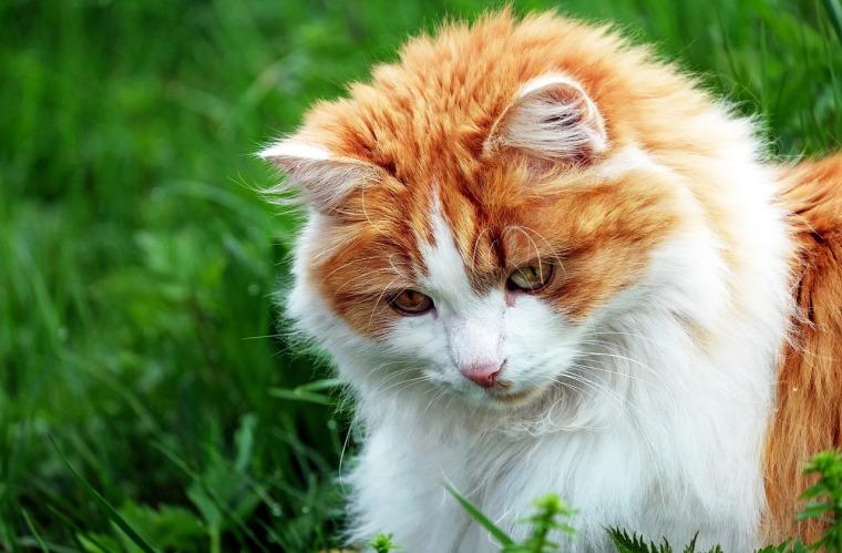 cat-1318439_1280