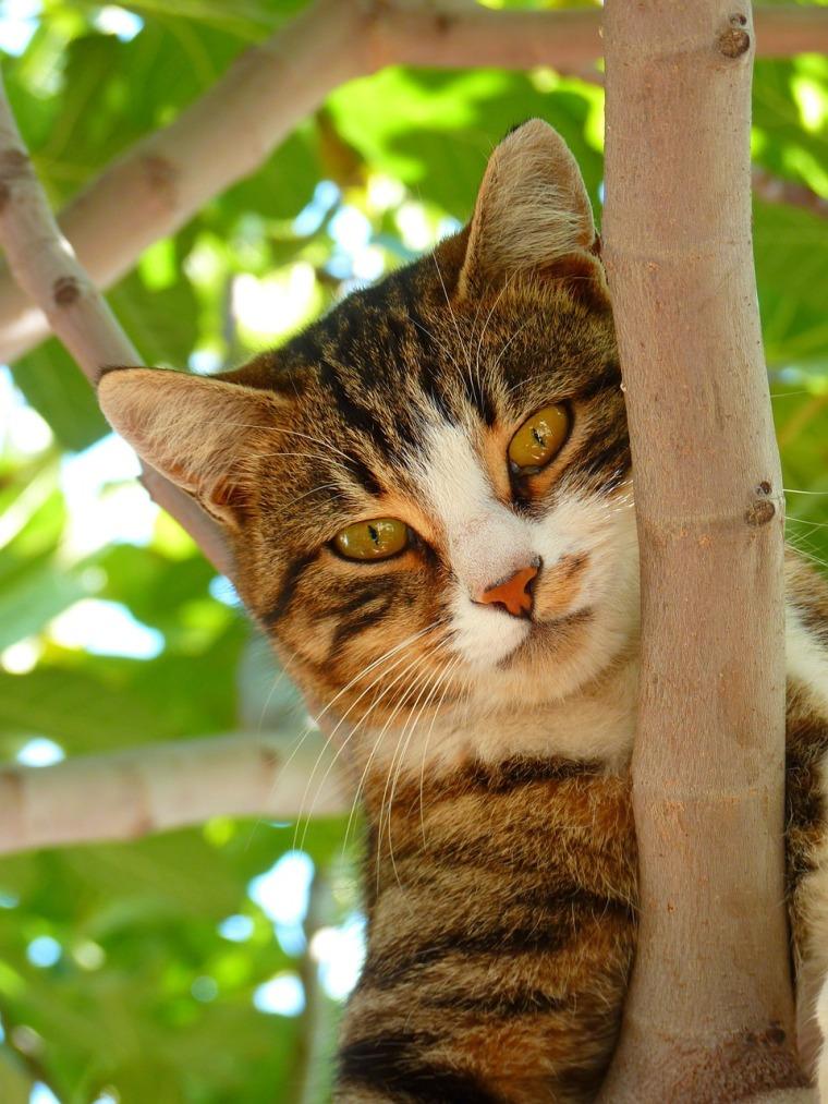 cat-61079_1280