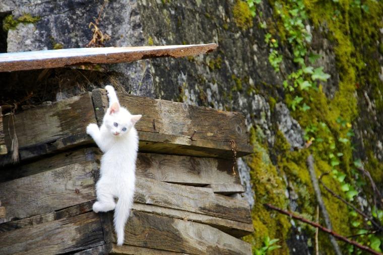 cat-1028287_1280.jpg
