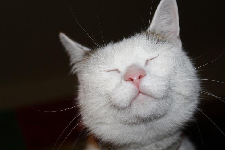 cat-1329956_1280