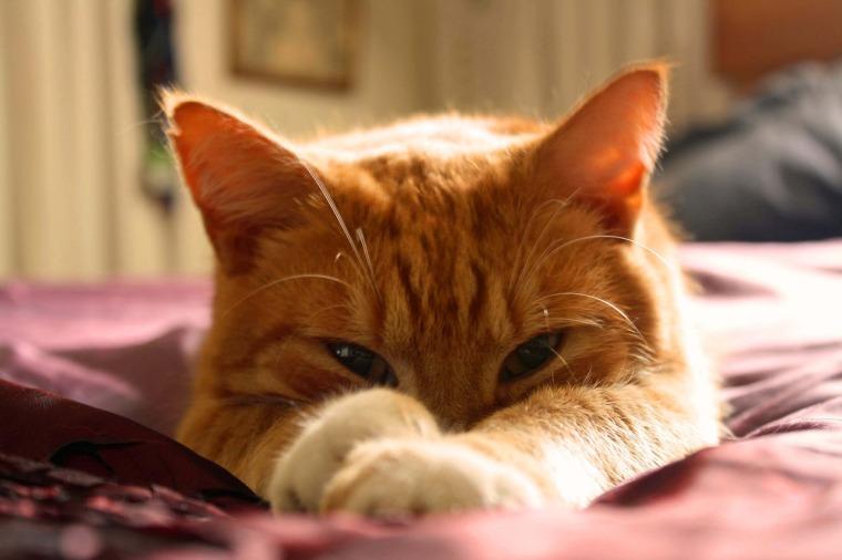 cat-1347176_1280