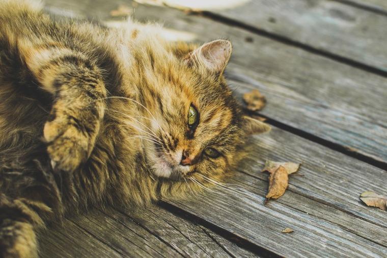 cat-691591_1280