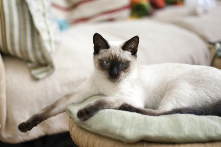 cat-882060_1280